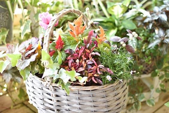 風の丘ガーデン 季節の寄せ植え