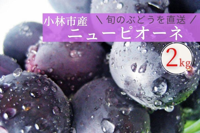 小林産ニューピオーネ(約2kg)
