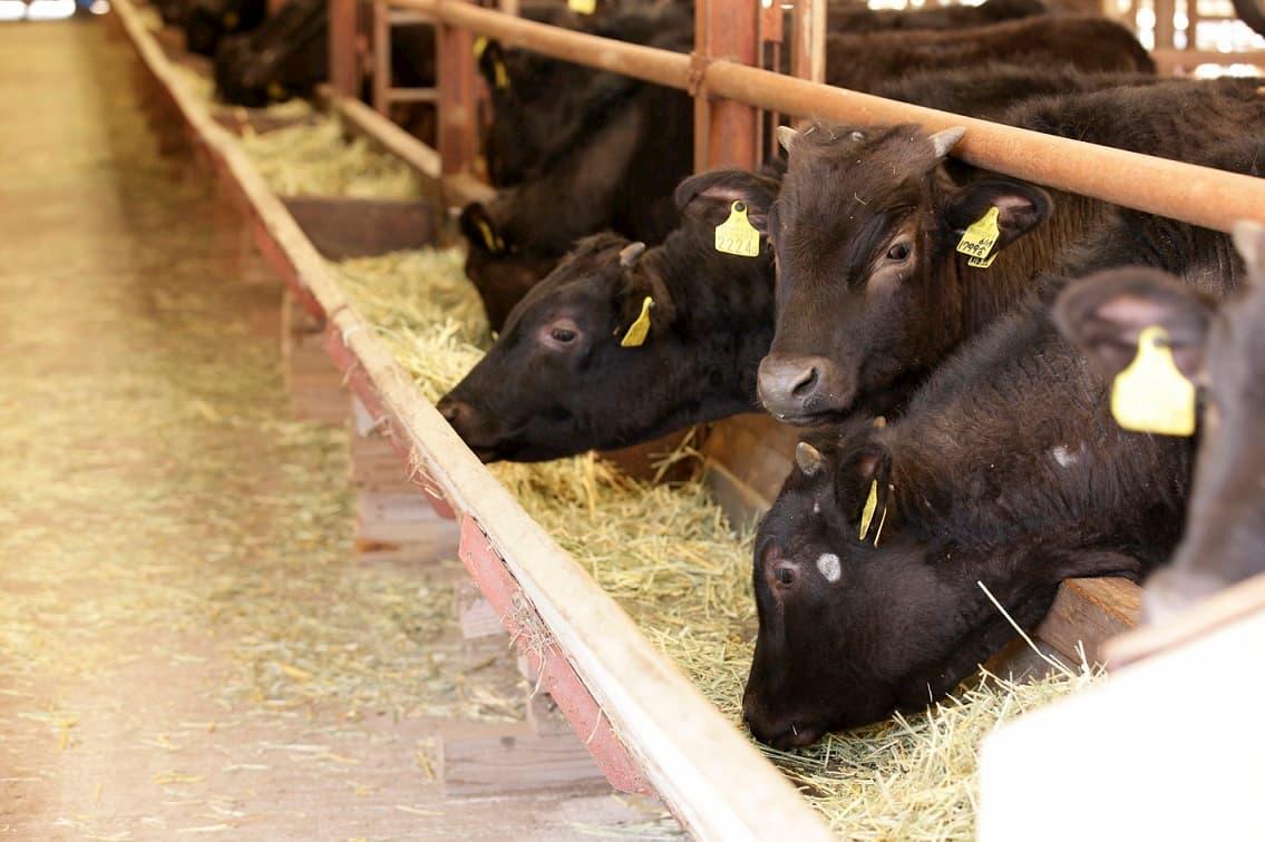 (有)西ノ原牧場牛直販 なかにし和牛 バラエティ焼肉用400g