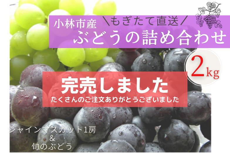 小林産ぶどう詰め合わせ(約2kg)
